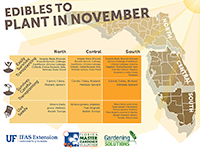 Edibles to Plant in November graphic