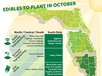 A graphic showing vegetables to plant in October for Florida