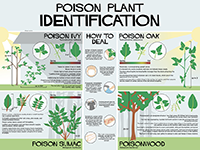 A graphic showing tips for identifying poisonous plants