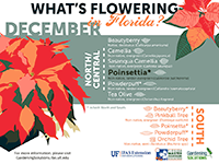 A graphic showing Florida trees that flower in December