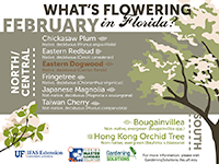 A graphic showing some Florida trees that flower in February