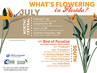 A graphic showing Florida trees that flower in July