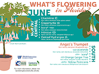 A graphic showing Florida trees that flower in June