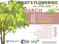 A graphic showing some Florida trees that flower in March