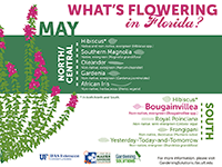A graphic showing Florida trees that flower in May