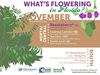 A graphic showing Florida trees that flower in November