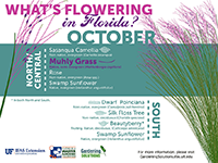 A graphic showing Florida trees that flower in October