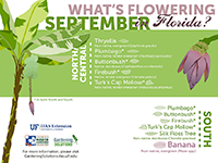A graphic showing Florida trees that flower in September