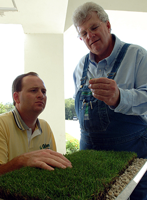 Two men closely inspecting a square of green turfgrass
