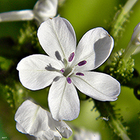 A simple white flower
