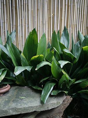 Outdoor Plants Full Sun Landscaping