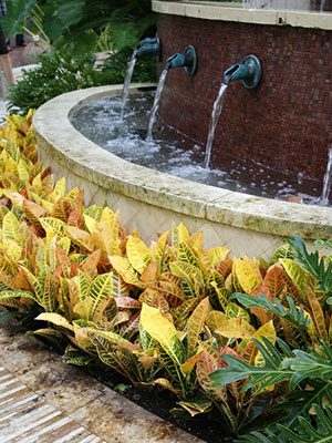 Crotons growing in front of a large fountain
