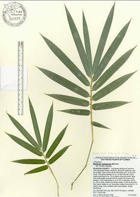 Plant Names Florida