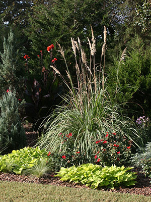 Pampas grass in a landscape bed