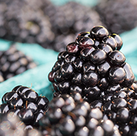 Close up shot of a blackberry