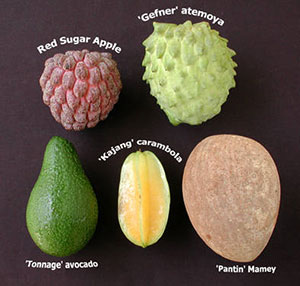 Tropical Fruit Gardening Solutions