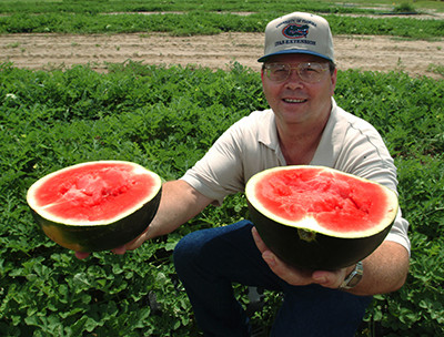 Uf Ifas Horticulture Professor Steve Olson Holds A Seedless Watermelon Cultivar Developed At Ap Photo University Of Florida Marisol Amador