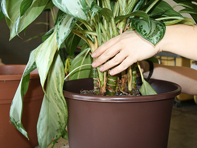 hand steadying a houseplant