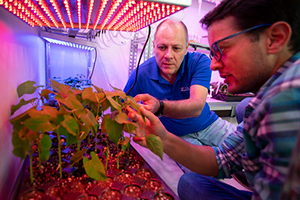 Two men looking at growing plants in a lab under warm colored LED lighting