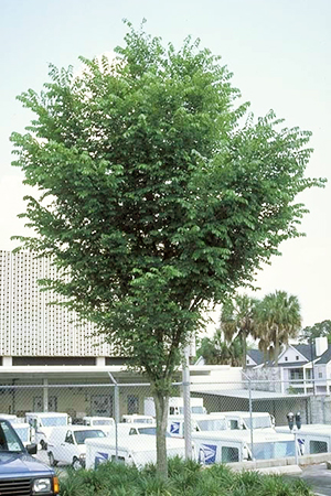 Small tree in parking lot