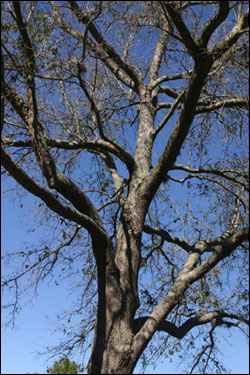 Preparing Trees For Hurricanes Gardening Solutions