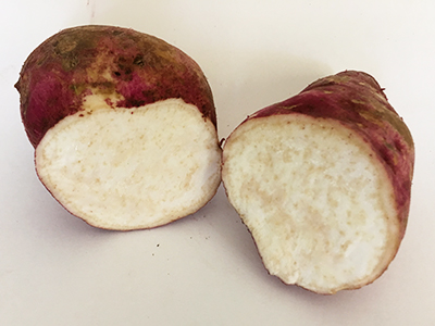 A boniato tuber cut open to revel white flesh speckled