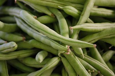 Bush Beans Gardening Solutions University Of Florida