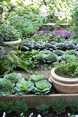 Vegetable Gardening in Florida Series Gardening Solutions