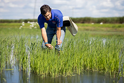 Man standing in grassy rice paddy with water up to his knees