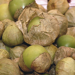 A pile of green tomatillos, some completely encased in their papery husks, others have started to shed their husks.