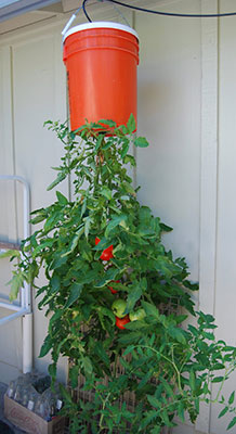 Growing Vegetables in Containers Gardening Solutions