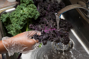 A gloved hand washing purple leafy kale under a kitchen faucet
