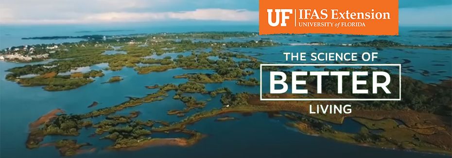 Bird's eye view of Florida wetlands