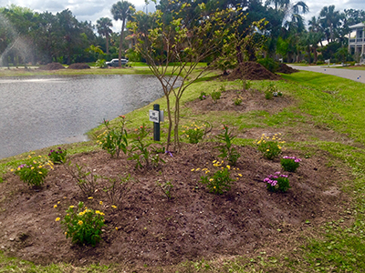 A freshly laid flower bed including a small tree alongisde a pond with a fountain.