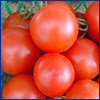 round red cherry tomatoes