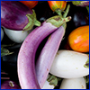 Eggplants that vary in color and shape