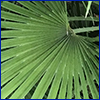 Close view of a green palm frond