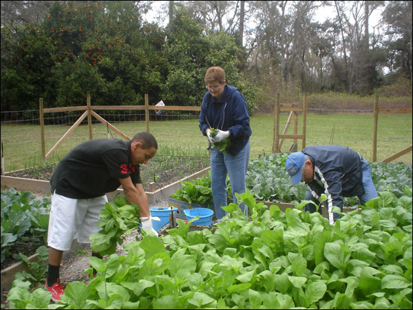A young volunteer and two Master Gardeners work in the garden