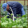 Master Gardener working in garden
