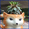 Succulent plant growing in a mug shaped like a fox