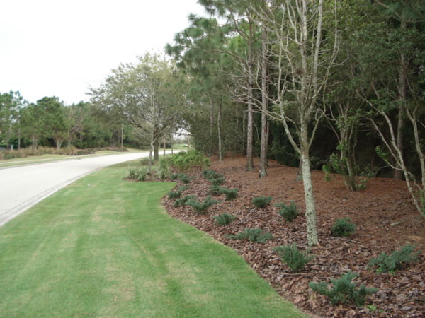 Lakewood Ranch roadside after makeover