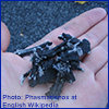 Photo of rubber mulch in hand by Phasmatisnox at English Wikipedia