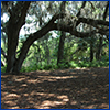 An old live oak's arching branches make deep shade
