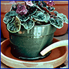 African violet in ceramic pot being watered