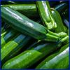 A pile of shiny green zucchini squash