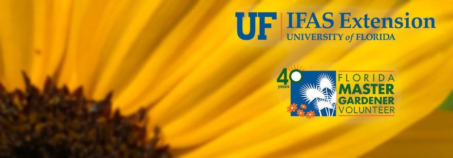 The UF/IFAS and Master Gardener 40th logos on a yellow sunflower background