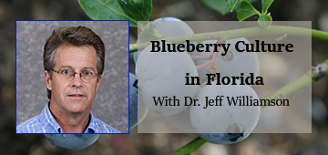 Photo of Dr. Jeff Williamson and title Blueberry Culture in Florida on a background of blueberries