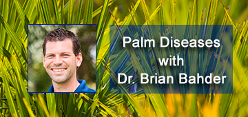 Photo of Dr. Brian Bahder with webinar title Palm Diseases, and the background is a photo of palmetto fronds