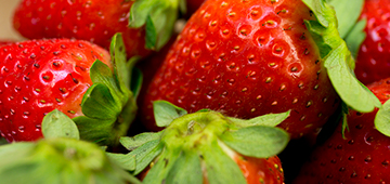 Close up photo of bright red strawberries by UF/IFAS Tyler Jones.