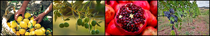 A banner with four photos: lemons, olives, a cut open pomegranate, and grapes.